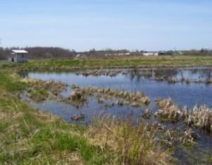 wetland_stewardship